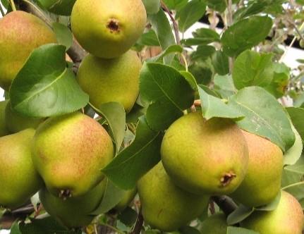 Круглогодичный Обучающий Центр «Уральский плодовый сад» начал свою работу