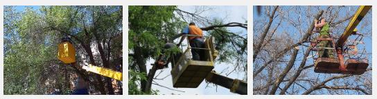 """Работа компании ведется в решении разного вида """"спецзадач""""  по строительству, грузоперевозкам, в вопросах уборки и дорожных работ, а также и благоустройства территорий и даже лесозаготовок."""